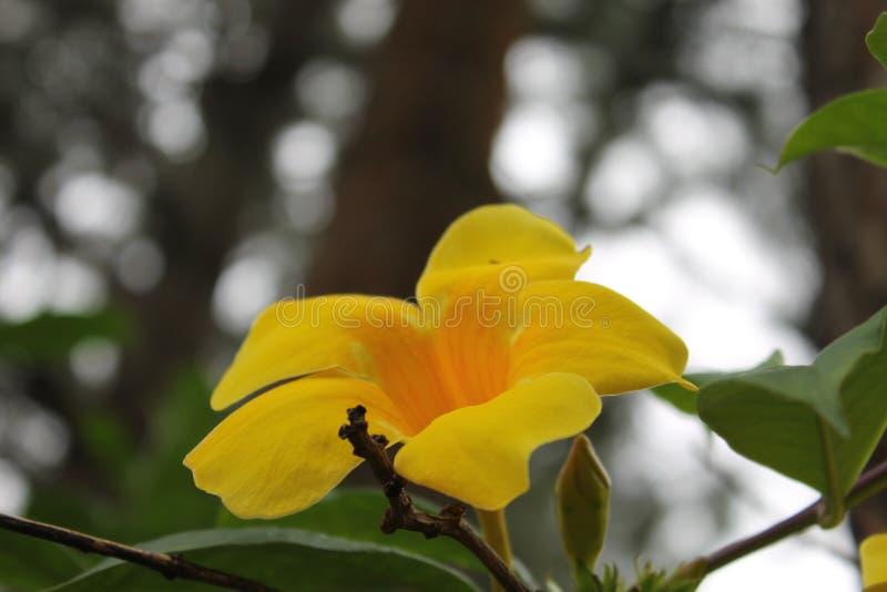 Fiore giallo con una foresta nei precedenti immagine stock