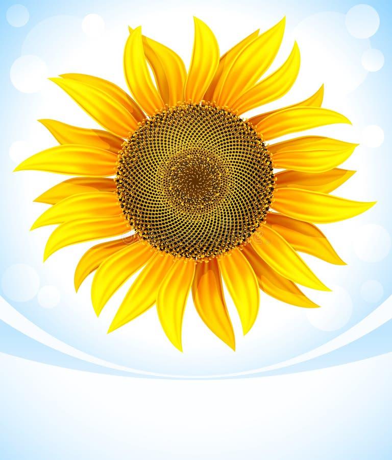 Fiore giallo del girasole illustrazione di stock