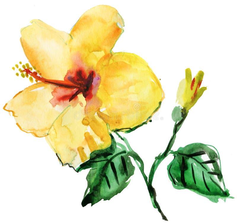 Fiore giallo dell'ibisco dell'acquerello illustrazione di stock