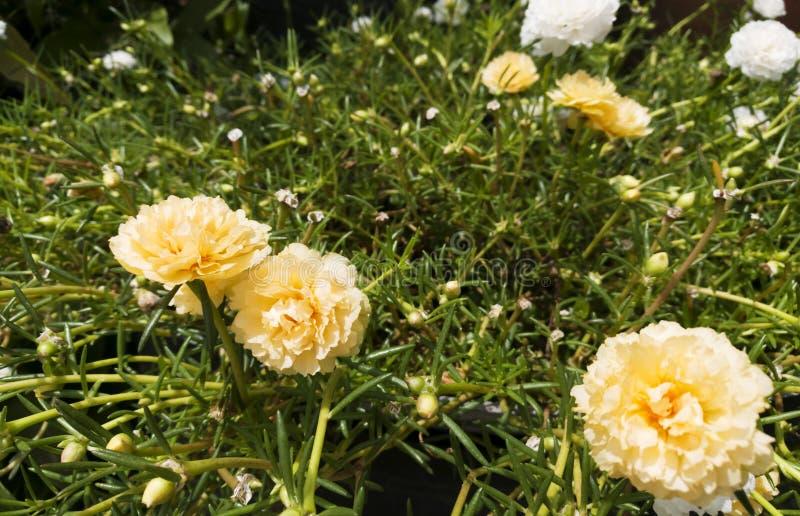 Fiore giallo di bellezza immagini stock