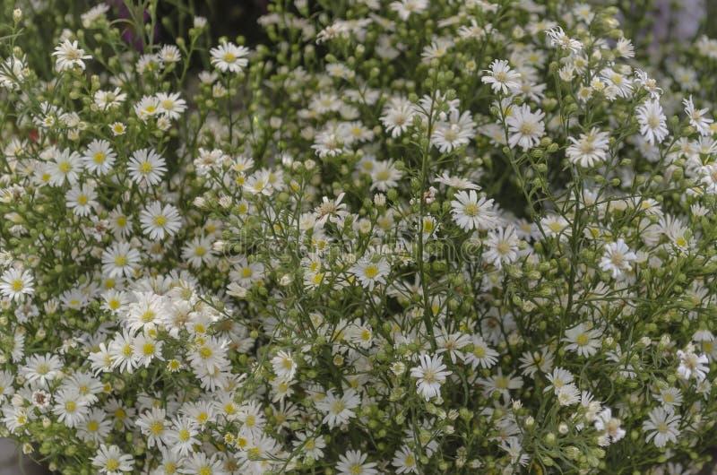 Fiore giallo e bianco nel mercato immagini stock