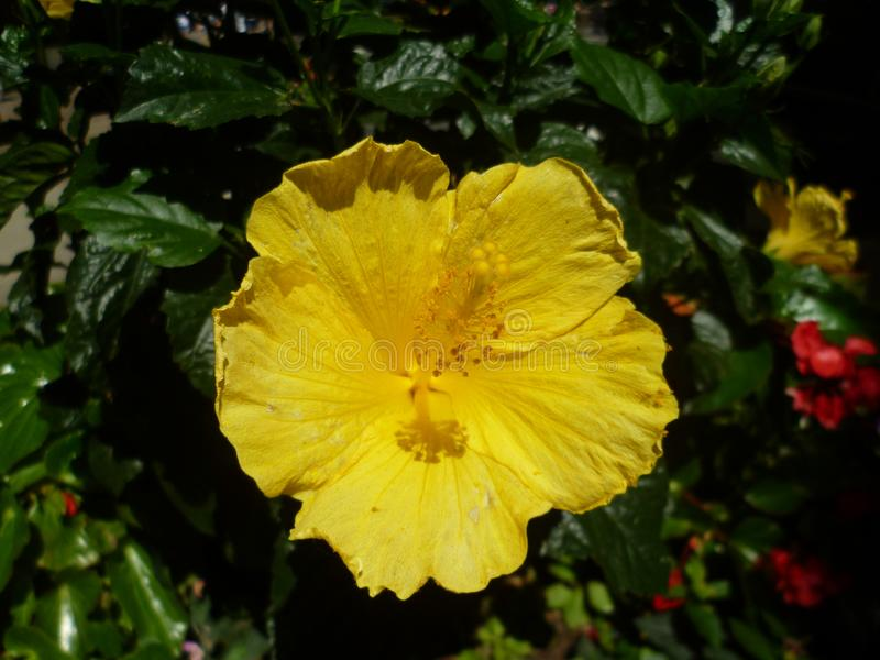 Fiore giallo a New York fotografia stock libera da diritti