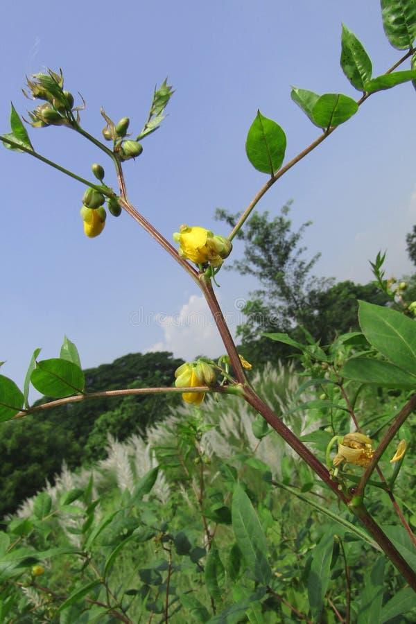 Fiore giallo sul ramo fotografia stock libera da diritti