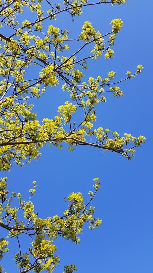Fiore giallo sull'albero immagini stock libere da diritti
