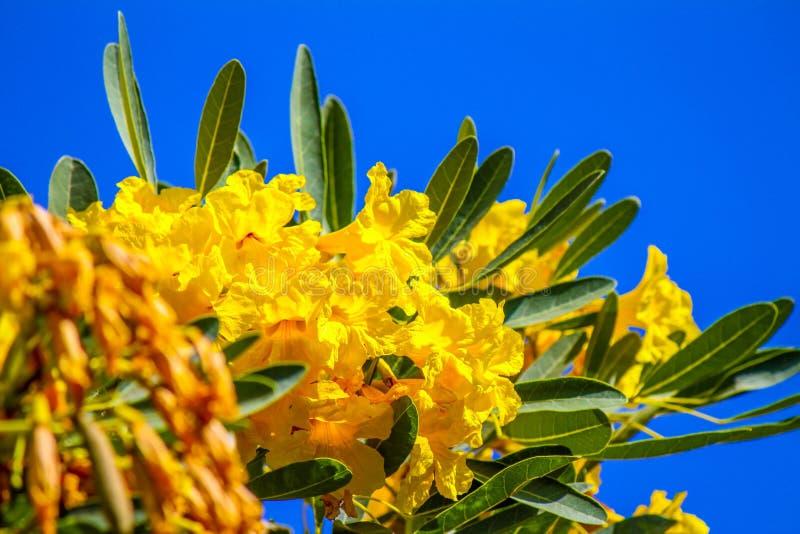 Fiore giallo tropicale con il fondo del cielo blu immagine stock libera da diritti