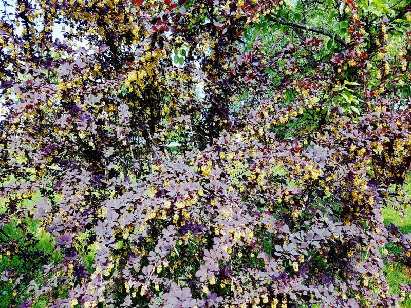 Fiore giallo viola fotografia stock