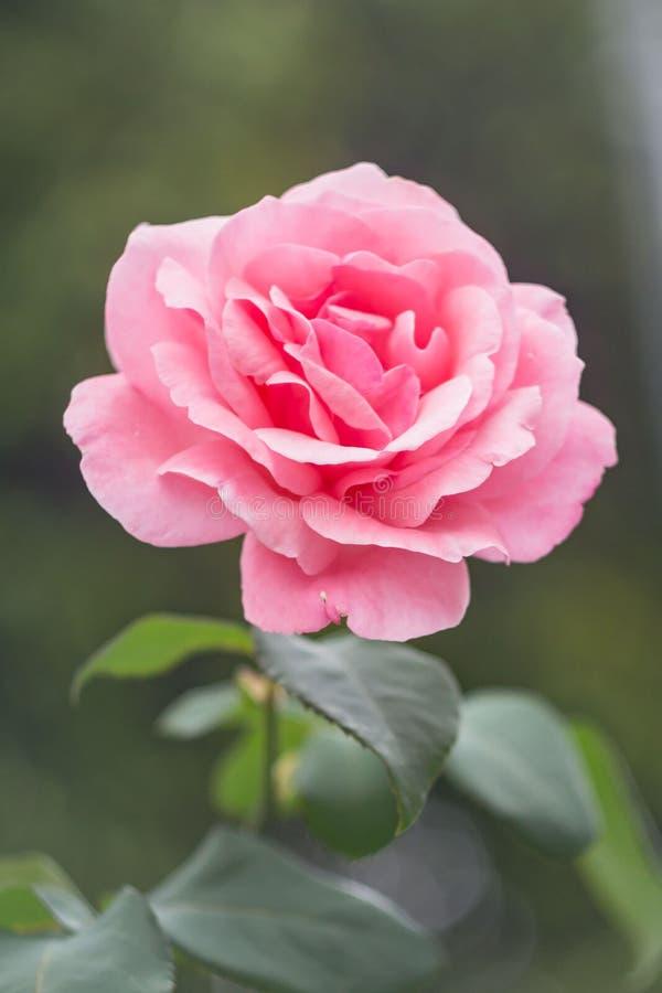 Fiore, Fiore, Giardino Dominio Pubblico Gratuito Cc0 Immagine