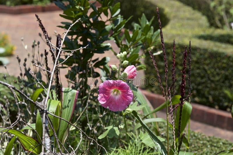 Download Fiore in giardino fotografia stock. Immagine di nero - 56891116