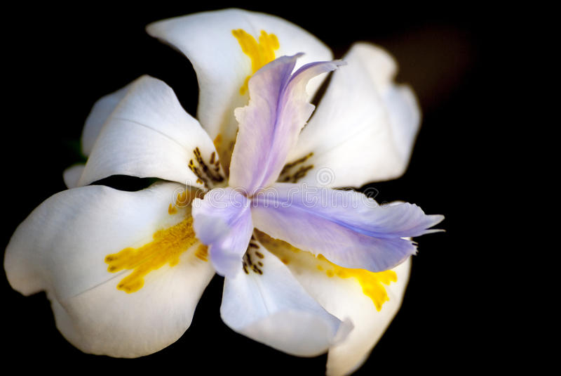 Fiore grazioso fotografia stock libera da diritti