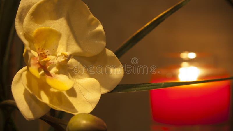 Fiore grazioso della stazione termale fotografie stock libere da diritti