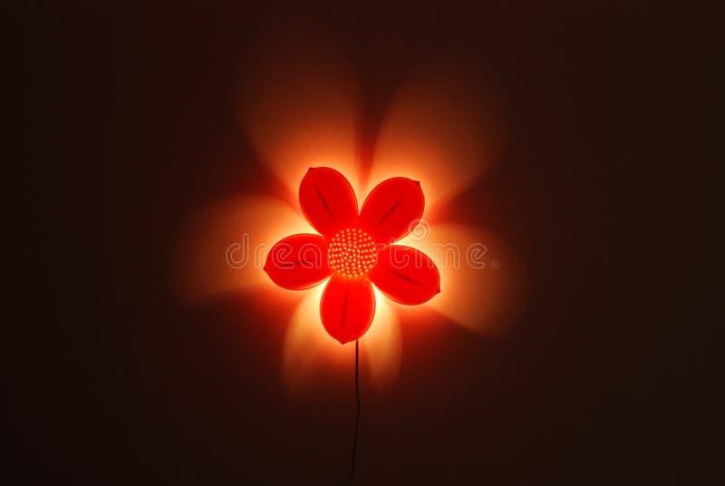 Fiore illuminato petalo rosa immagine stock libera da diritti