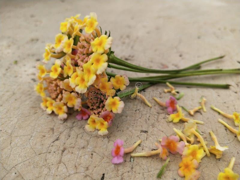 Fiore indiano raro del mazzo del colourfull fotografia stock libera da diritti