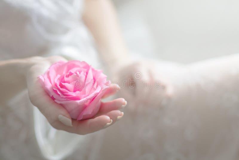 Fiore innocente in mani femminili delicate Copi lo spazio fotografie stock
