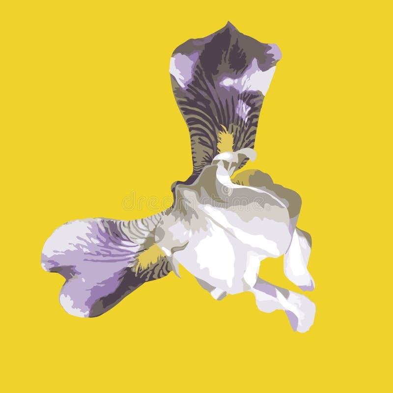 Fiore isolato realistico dell'iride su fondo giallo illustrazione vettoriale
