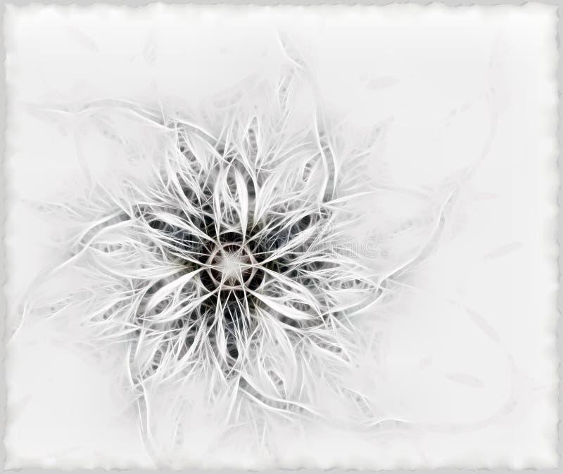 Fiore lanuginoso fragile royalty illustrazione gratis