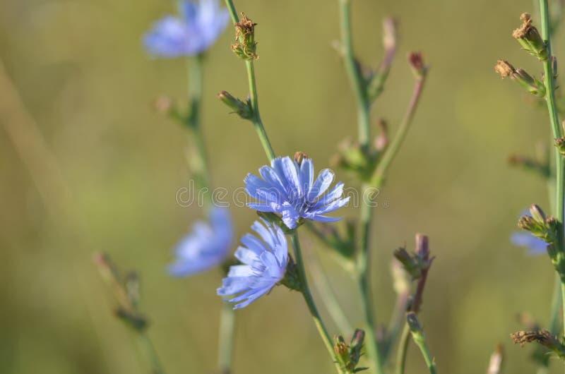 Fiore lilla - un fondo neutrale Primo piano Bordo vago immagine stock libera da diritti
