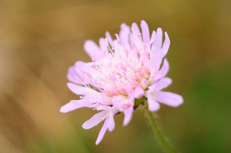 Fiore luminoso lilla immagine stock