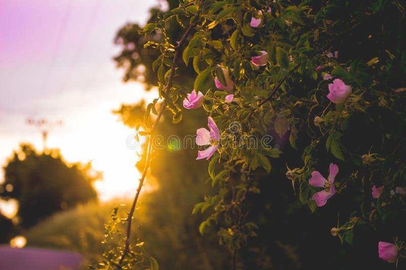 Fiore meraviglioso con un tramonto immagini stock libere da diritti