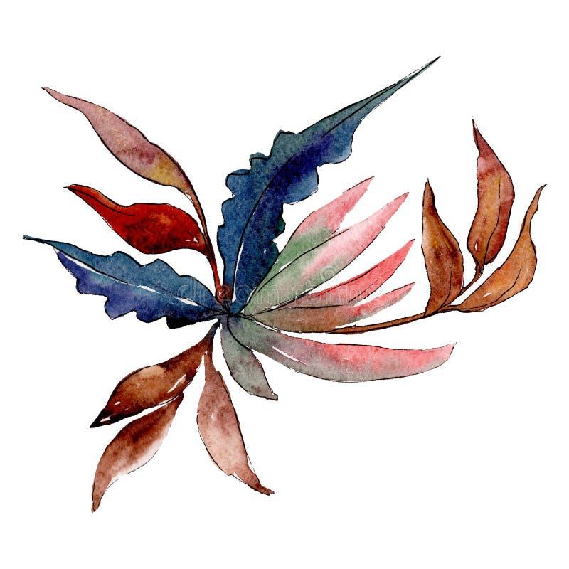 Fiore meraviglioso Elemento isolato dell'illustrazione del fiore Insieme della priorità bassa Mazzo di disegno acquerello dell'ac royalty illustrazione gratis