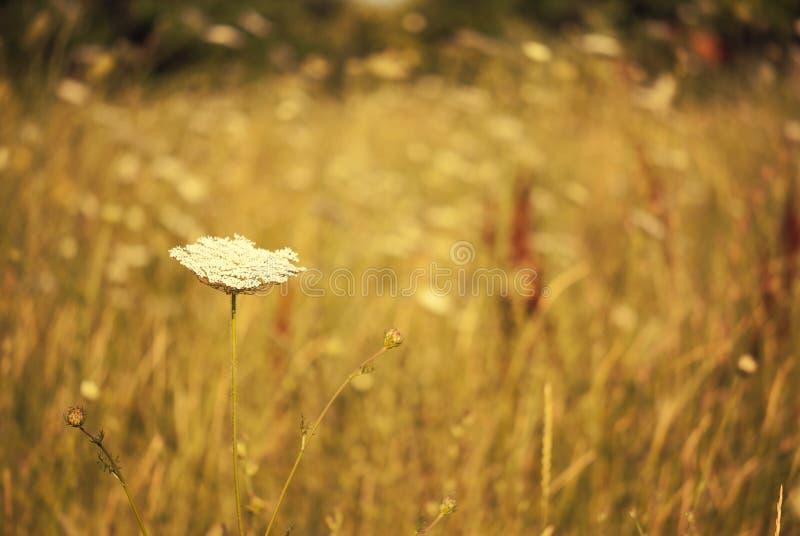 Fiore minuscolo di estate fotografia stock libera da diritti