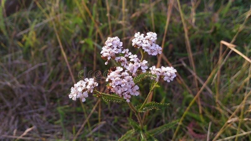 Fiore molto piacevole fotografia stock