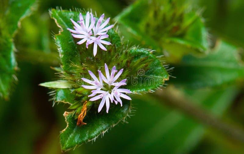 Fiore molto piccolo fotografia stock