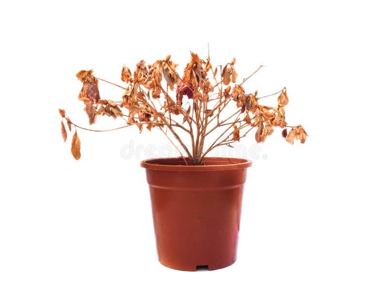 Fiore morto fotografie stock