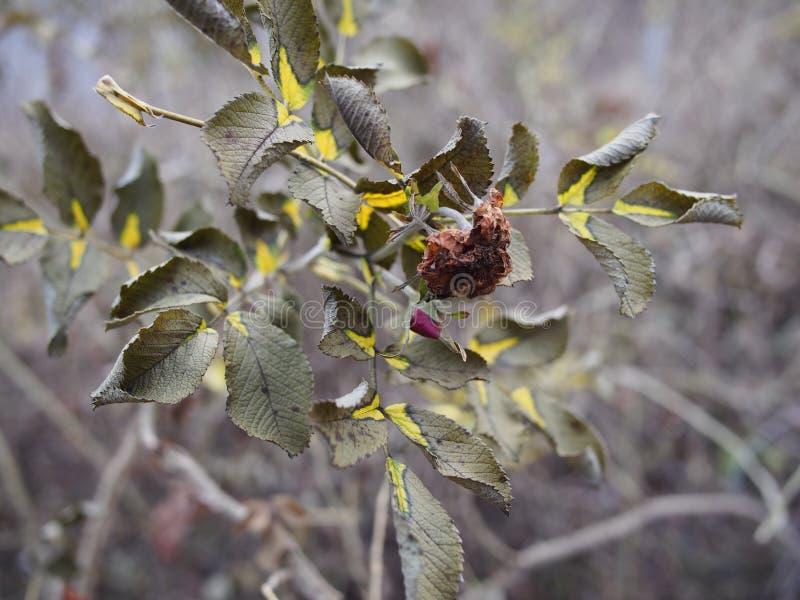 Fiore morto in autunno immagini stock