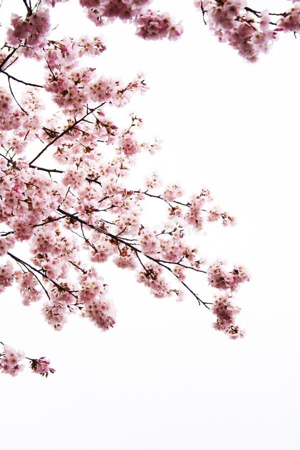 Fiore nel bacino fotografia stock