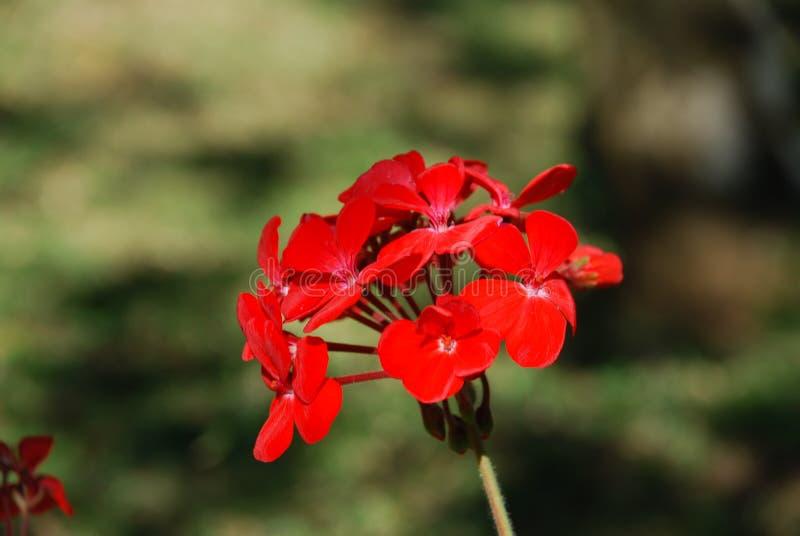 Fiore nel campo fotografie stock libere da diritti