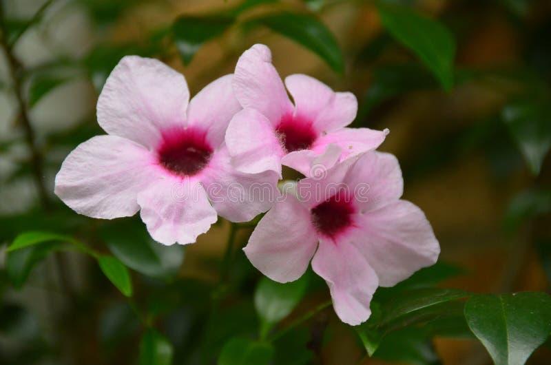 Fiore nel giardino della Nuova Zelanda fotografie stock libere da diritti