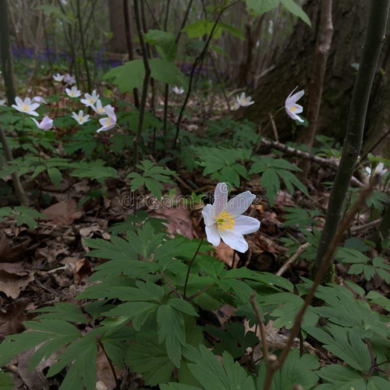Fiore nel legno fotografia stock
