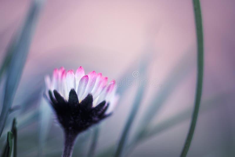 Fiore nel paesaggio incantato fotografia stock libera da diritti