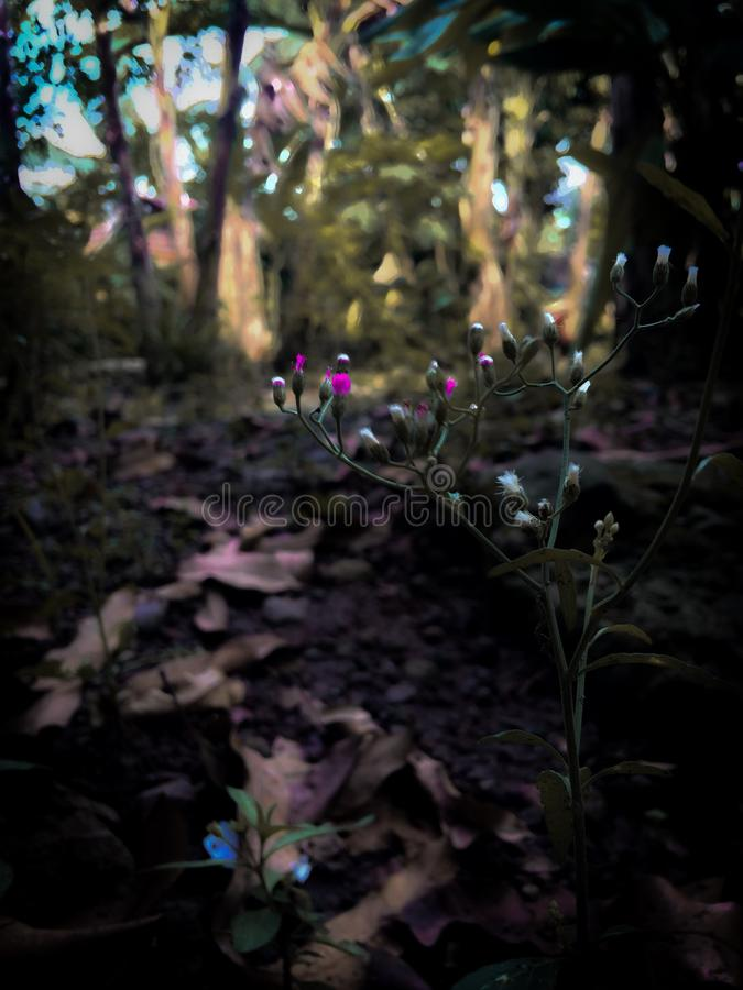 Fiore nel selvaggio fotografia stock libera da diritti