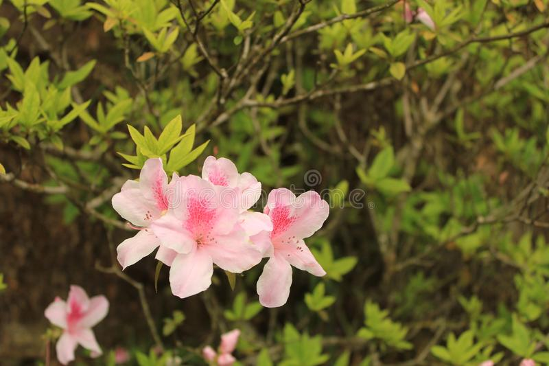 Fiore nell'ambito di luce solare fotografia stock libera da diritti