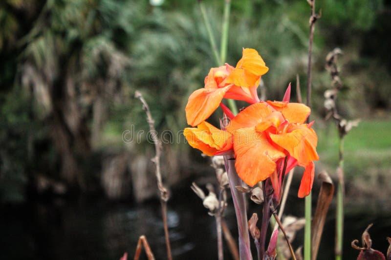 Fiore nell'aria aperta fotografia stock libera da diritti
