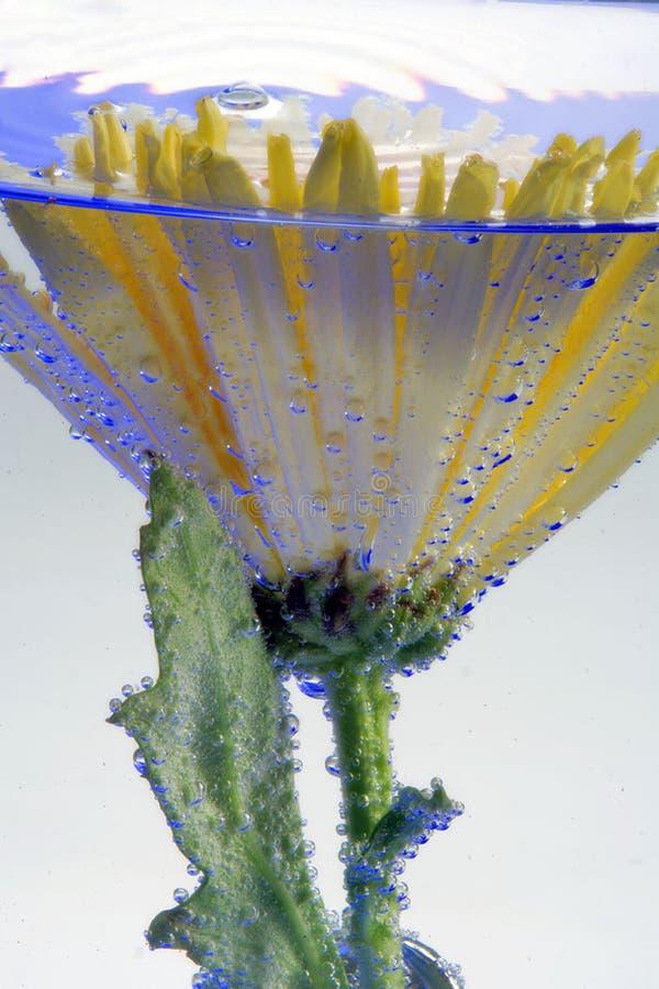 Fiore nelle bolle di aria immagini stock libere da diritti
