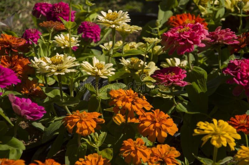 fiore nelle immagini delle azione del giardino fotografie stock