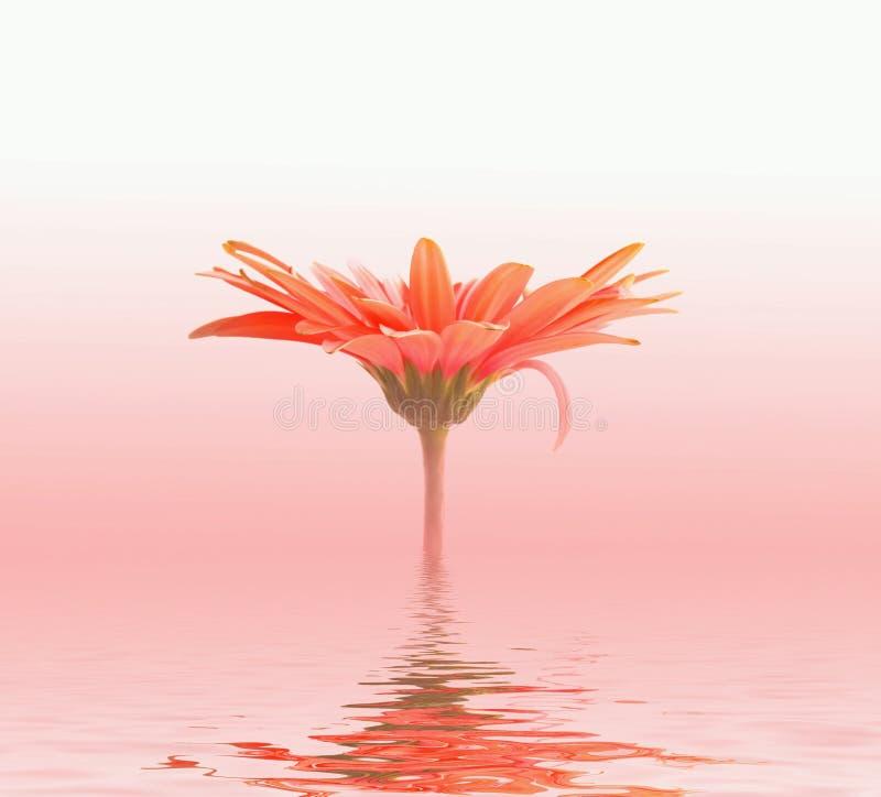 Fiore ottimistico in acqua royalty illustrazione gratis