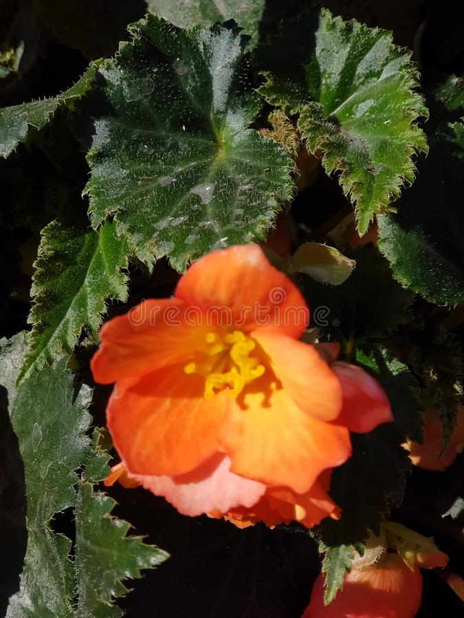 Fiore in parco immagine stock libera da diritti