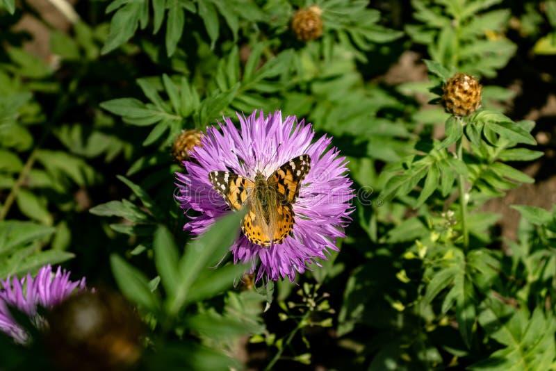 Fiore porpora con la farfalla immagini stock