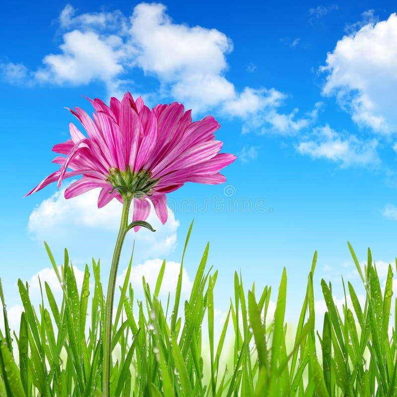 Download Fiore porpora della molla fotografia stock. Immagine di colorful - 55359302