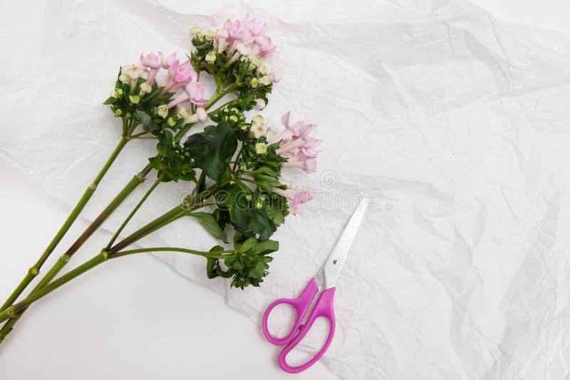 Fiore porpora dolce di vista superiore pronto per sistemare fotografie stock libere da diritti