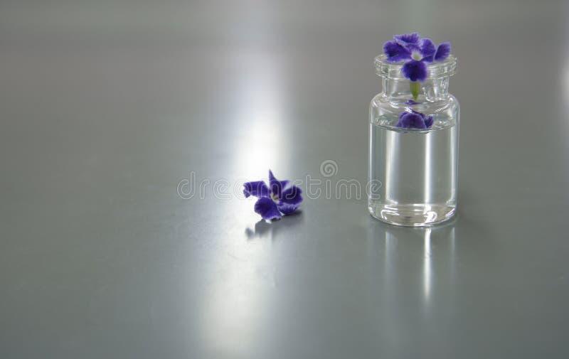 Fiore porpora in fiala di scienza in laboratorio fotografie stock libere da diritti