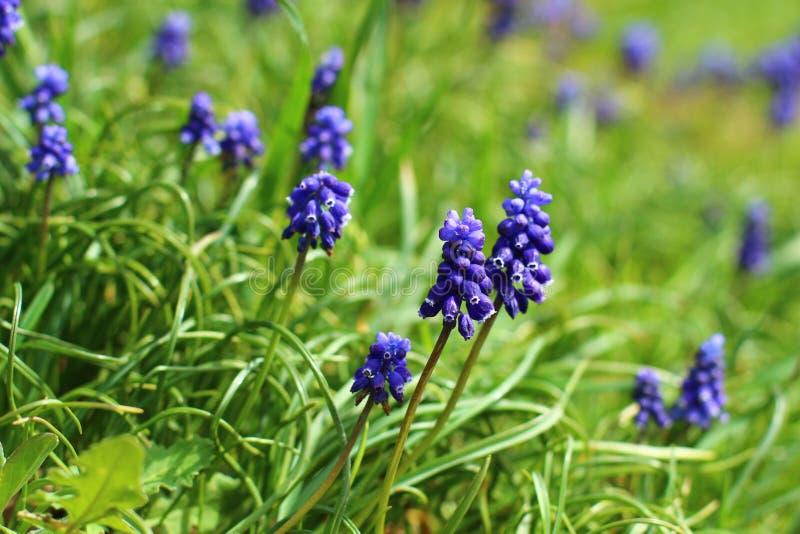 Fiore-prato fotografia stock