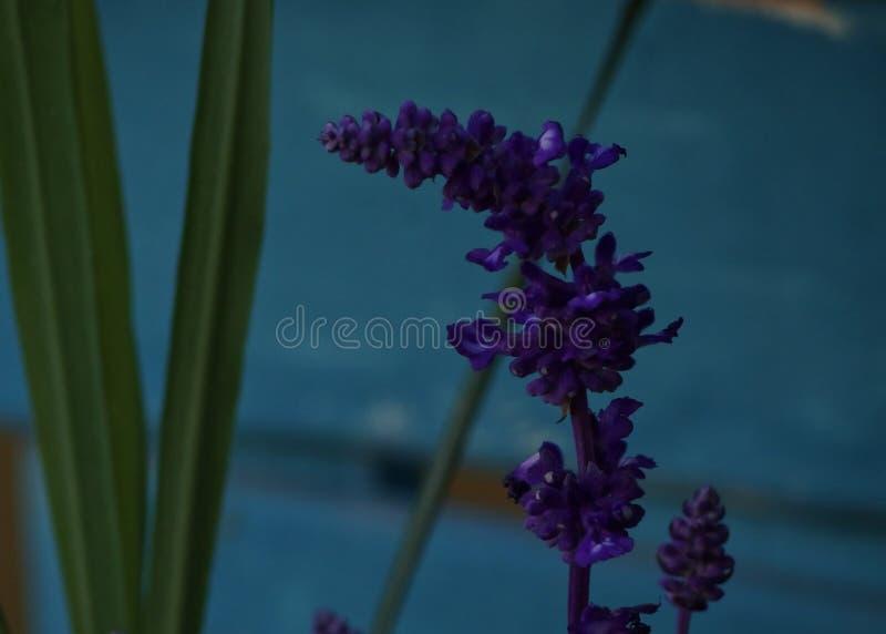 Fiore prudente fotografie stock