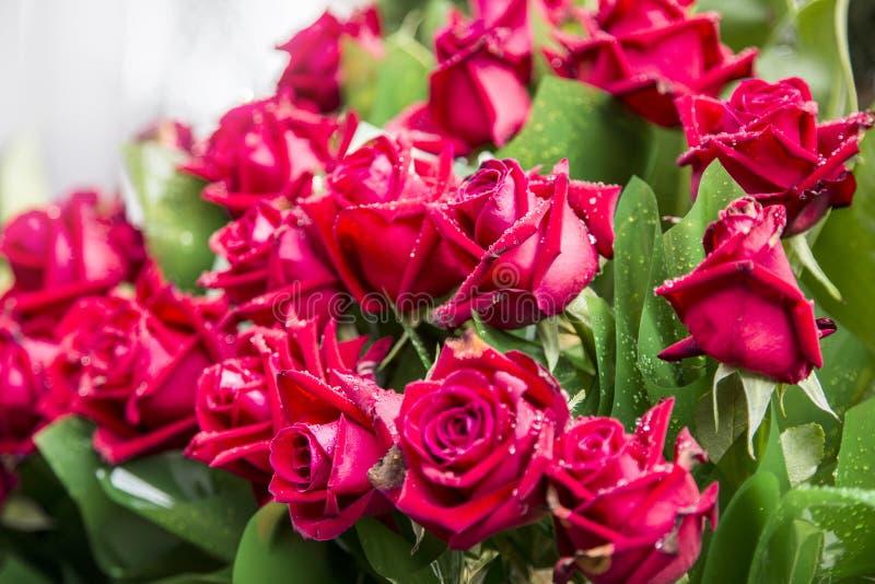 Fiore reale della rosa rossa e plastica verde fotografia stock libera da diritti