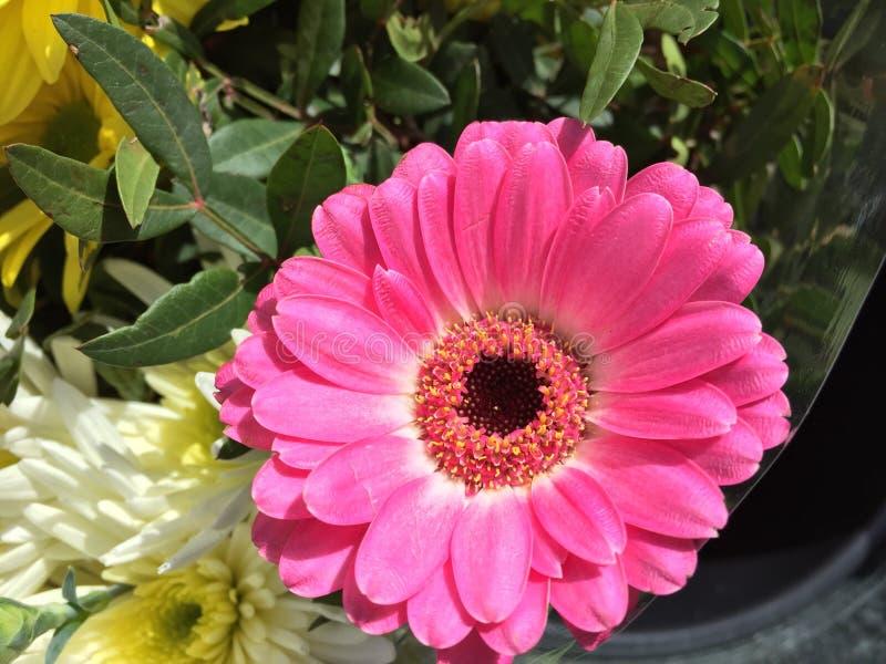 Fiore rosa fotografia stock