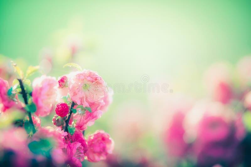 Fiore rosa adorabile al fondo verde della natura in giardino o in parco, all'aperto immagini stock libere da diritti