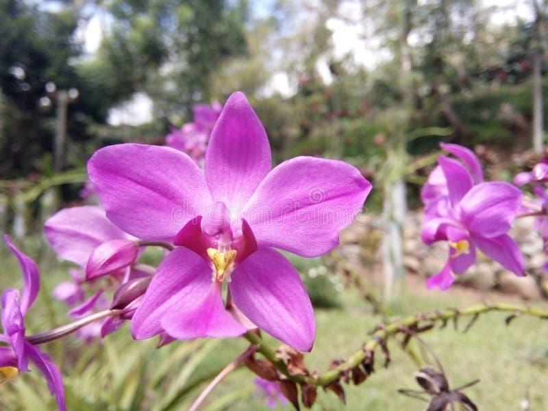 Fiore rosa beaty immagini stock